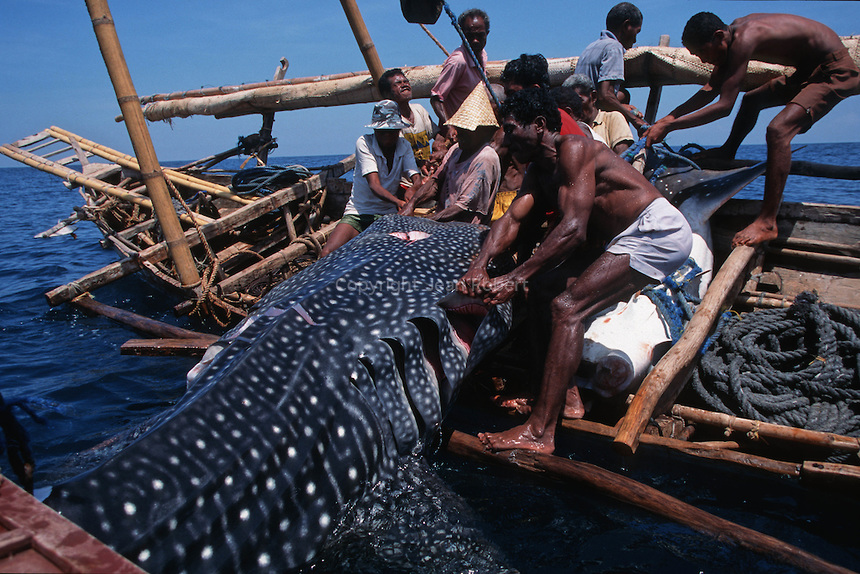 The Traditional Whale Hunt Of Lamalera Flores Top