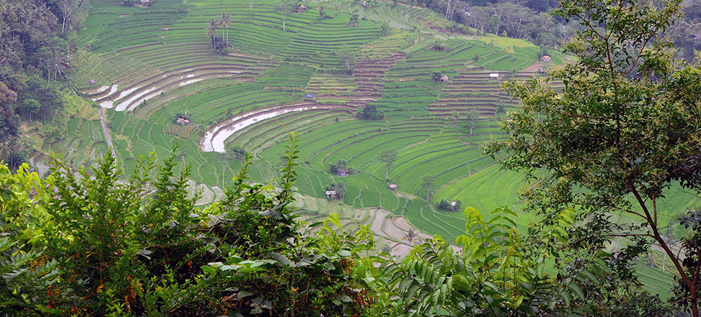 Explore the enchanting Sidemen, East Bali