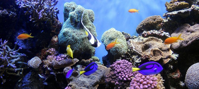 Manado and Bunaken underwater paradise