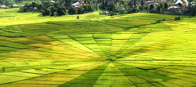 Ruteng Spider Web Rice Fields, Flores