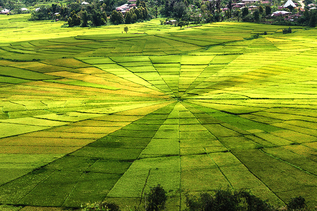 Ruteng Indonesia  city pictures gallery : Ruteng Spider Web Rice Fields, Flores – Top Indonesia Holidays
