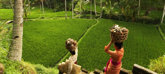 Bali Spiritual Experience: Meet local shamans, healers & readers