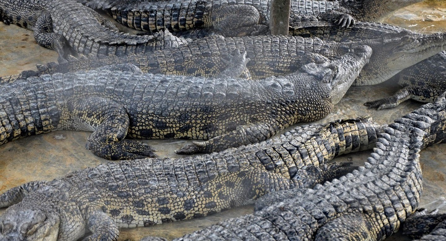 teritip-crocodile-farm-1