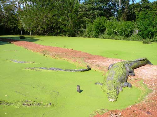 teritip-crocodile-farm-5