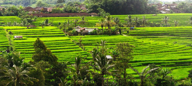 Uncovering Bali's Ancient Rice Terraces of  Pupuan, Bali