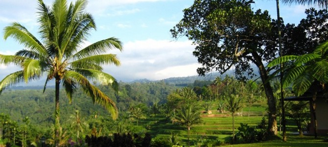 Kalibaru Plantation, East Java