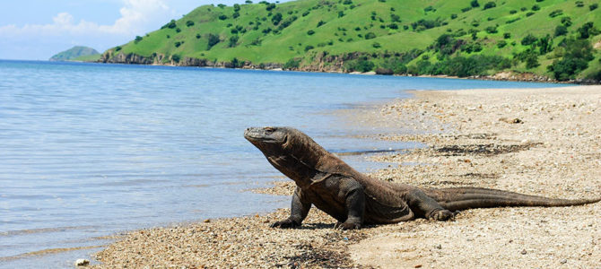 Komodo National Park to remain open & access will be restricted to 'Premium' Tourists